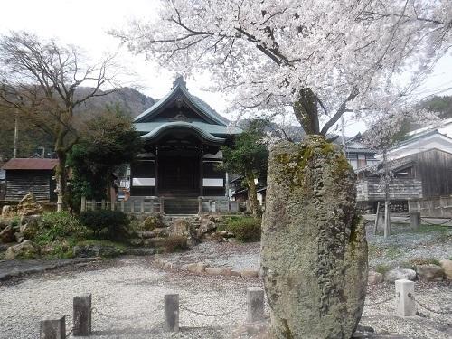 koutokuennnosakura  (3) - コピー.JPG