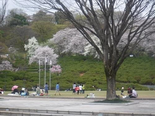 nishiyamakouenn 04.04 (7).JPG