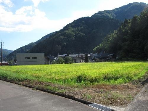 sugihashi  (1).JPG