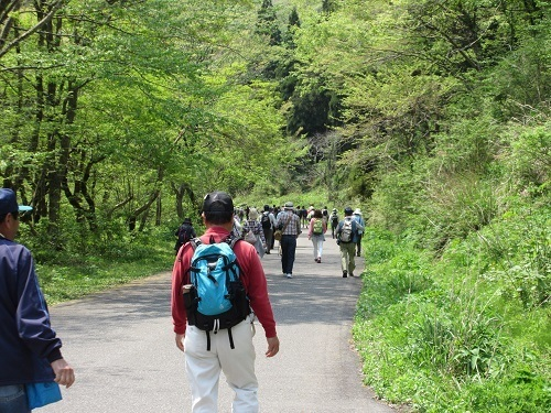 walking  (14).JPG
