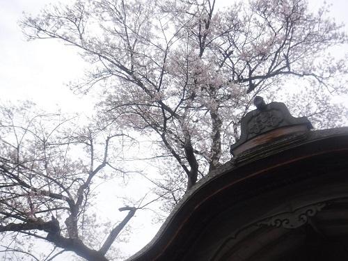 asakuraiseki 04.05 (3).JPG
