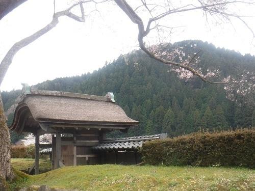 asakuraiseki 04.05 (4).JPG