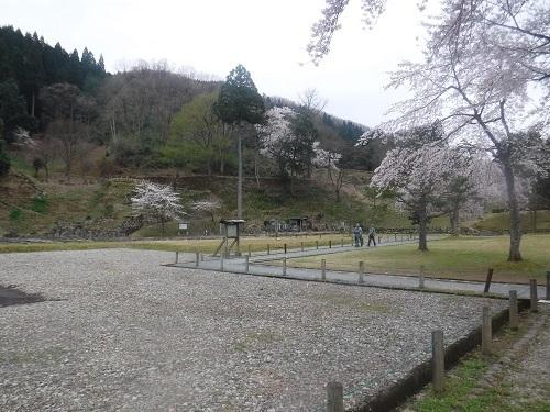 asakuraiseki 04.05 (5).JPG