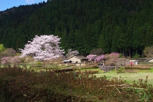 asakurayakata  (10).JPG