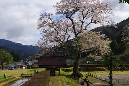 asakurayakata  (12).JPG