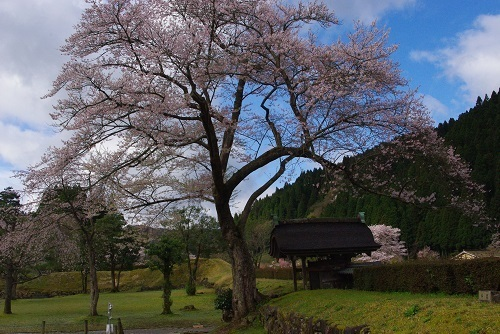 asakurayakata  (8).JPG