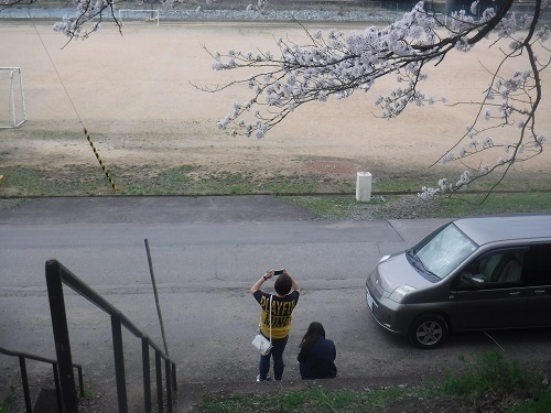 benntennzakura 04-05 (8).JPG