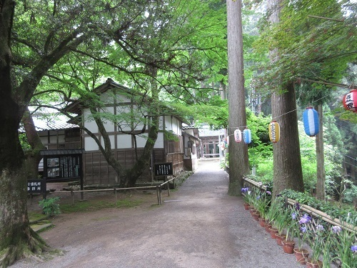 daiannzennji  (3).JPG