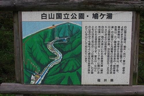 hatogayu  (10).JPG
