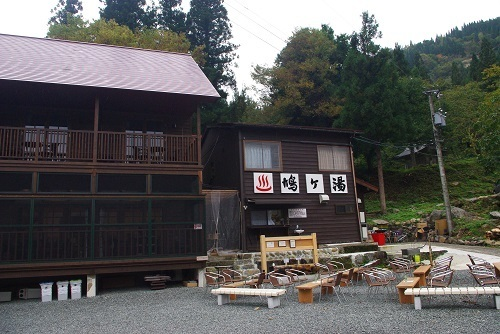 hatogayu  (4).JPG