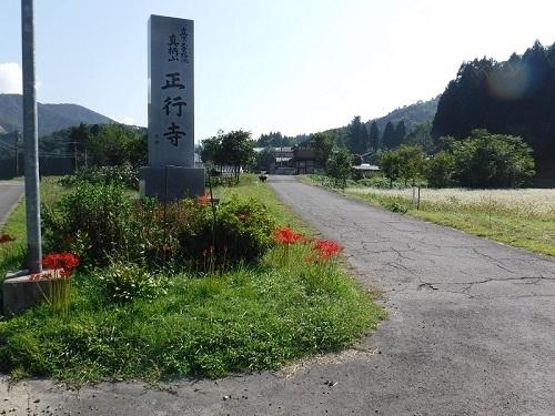 higannbana  (1).JPG