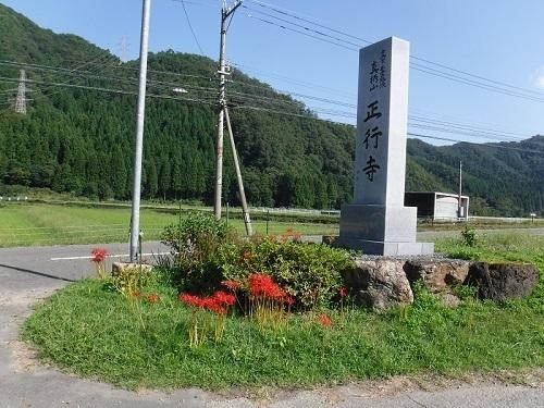 higannbana  (3).JPG