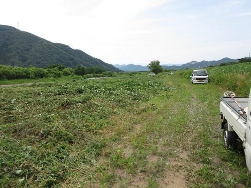 hinogawakusakari  (6).JPG