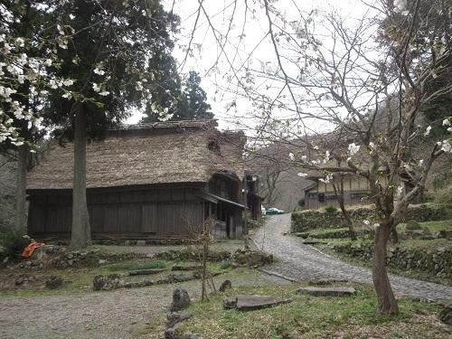itadori sakura  (2).JPG