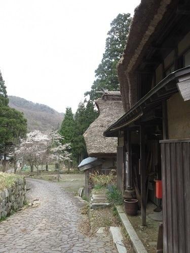 itadori sakura  (4).JPG