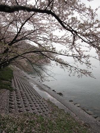 kaizu 15-0414 (4).JPG