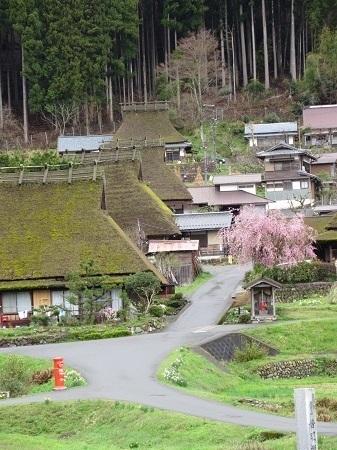 kayanosato 15-0414 (8).JPG