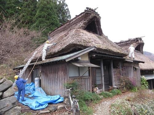 koketori  (3).JPG
