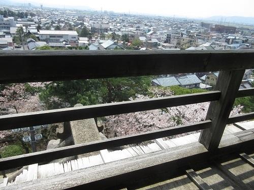 maruokajou sakura  (1).JPG
