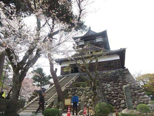 maruokajou sakura  (5).JPG