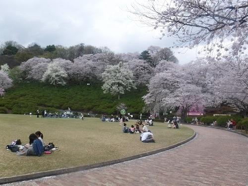 nishiyamakouenn 04.04 (10).JPG