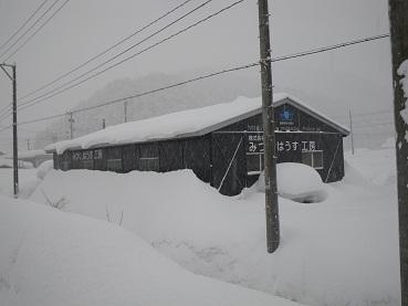 ooyuki 11-0106.JPG