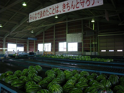 siroyamasuika 10-0804.JPG