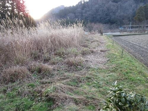 susuki  (1).JPG