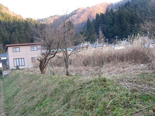 susuki  (3).JPG