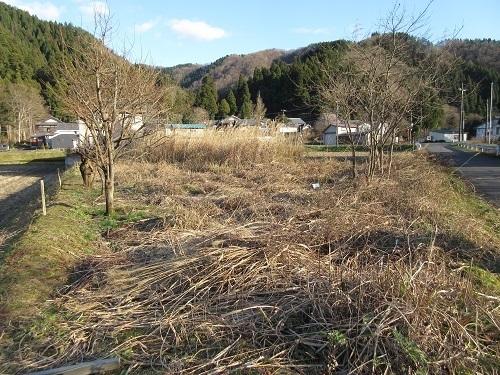 susuki  (5).JPG