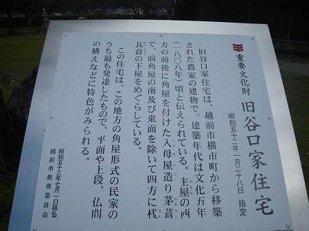 taniguchike 13-03 (3).JPG